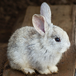 Rabbit & Hamster